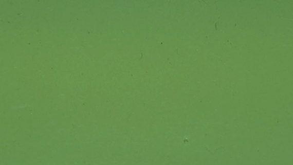 Zelený plný